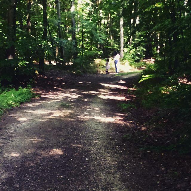 die guten Dinge Blog - Wald. freitagsblümchen