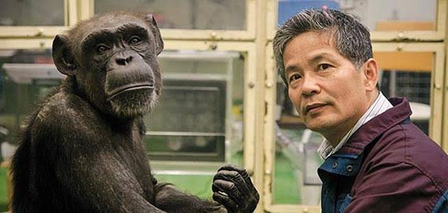 Simpanse sejatinya merupakan hewan primata yang seharusnya tinggal dan memiliki habitat ya  Ngeri, Jadikan Simpanse Sebagai Peliharaan, 3 Orang Ini Alami Hal Tragis