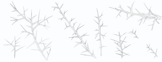 fracmentos aliaga, dibujo