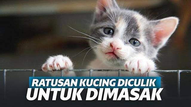 Viral 700 Kucing Diculik Lalu Dijadikan Masakan di China!