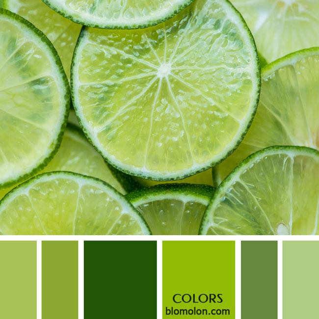 variedad_en_color_paletas_colores_1d