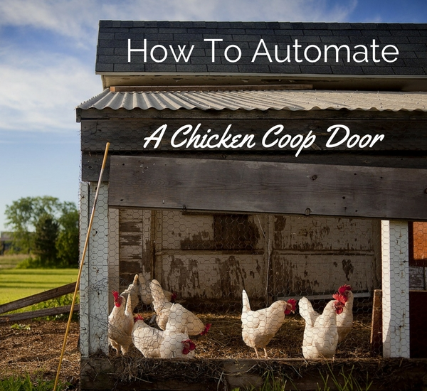 automated chicken coop