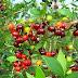 Todo árbol bueno da frutos buenos