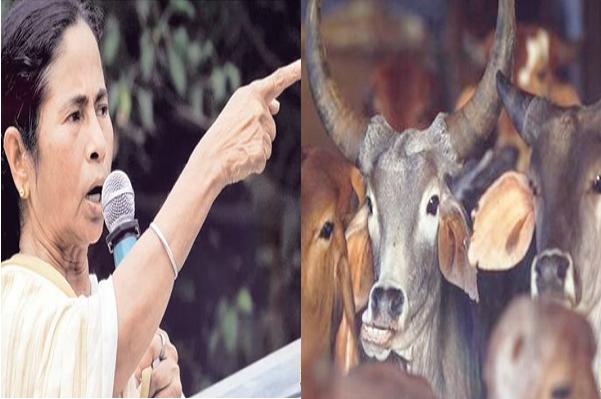 टोपी वालों को खुश करने के बजाय हिन्दुओं को खुश करेंगी ममता बनर्जी, सबको मुफ्त में बांटेंगी गाय