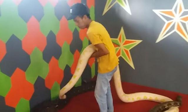 ular-piton-raksasa-1