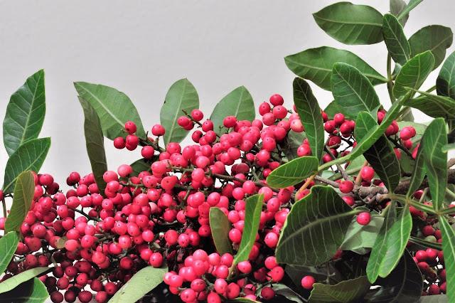 Pimenta Rosa (Imagem: Reprodução/Mercado Livre)