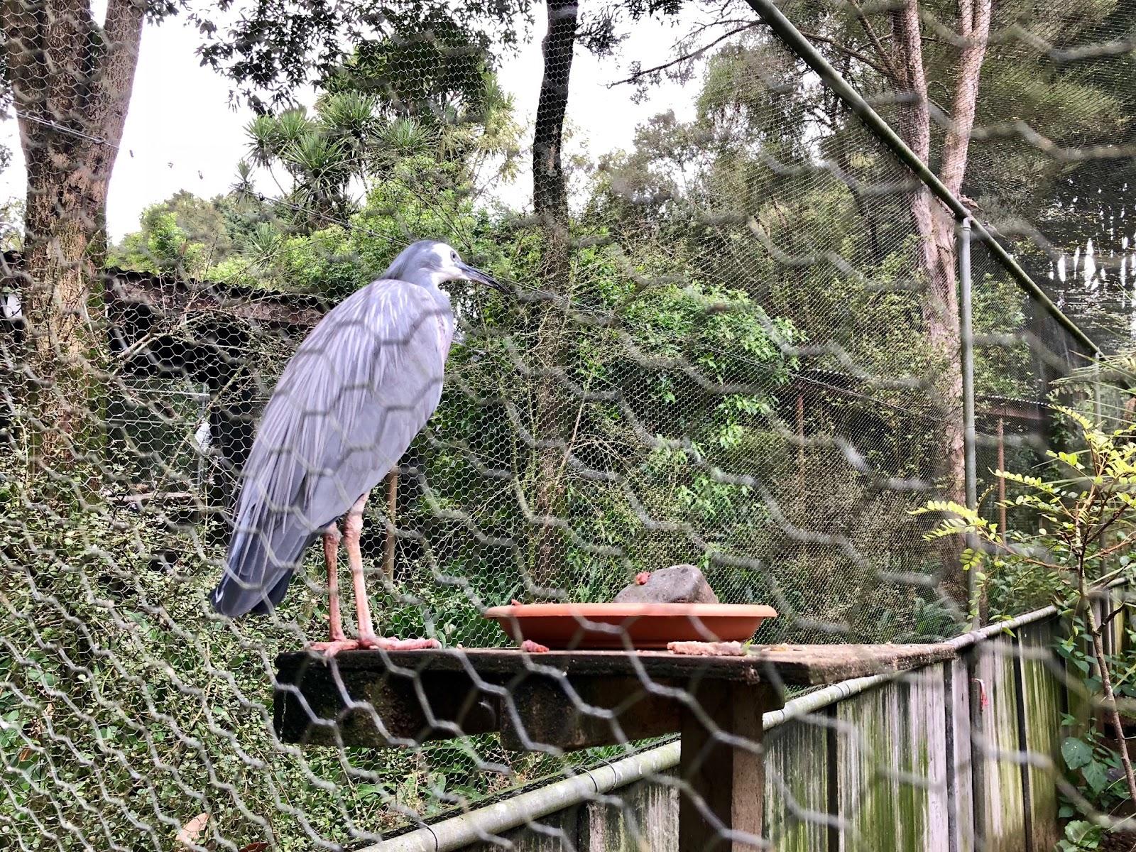 Kiwi House Otorohanga Best Place To See Kiwis