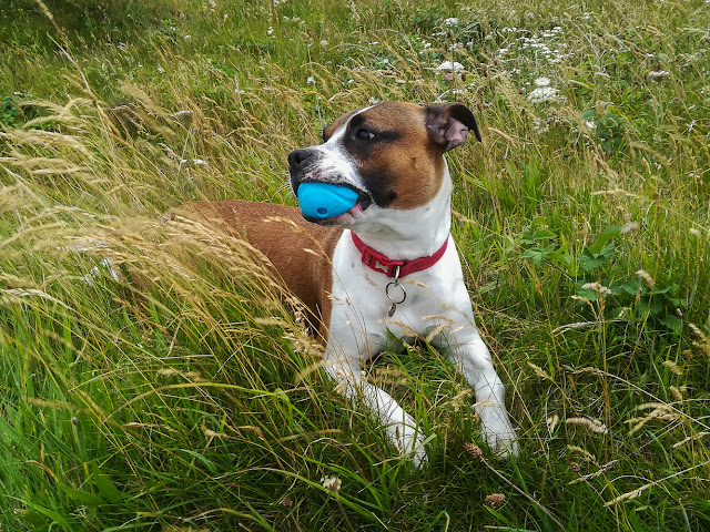 Photo of Ruby refusing to let go of the ball