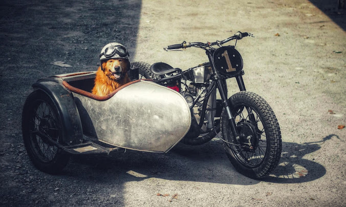 Just a happy dog in a sidecar.