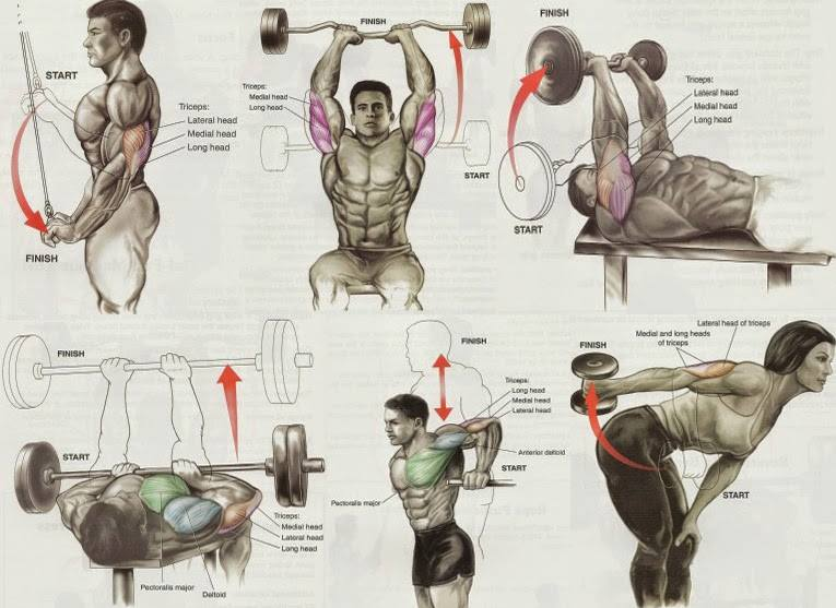 Triceps exercises chart also gym workout all bodybuilding rh