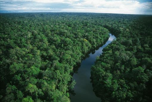 amazon rainforest south america - photo #16