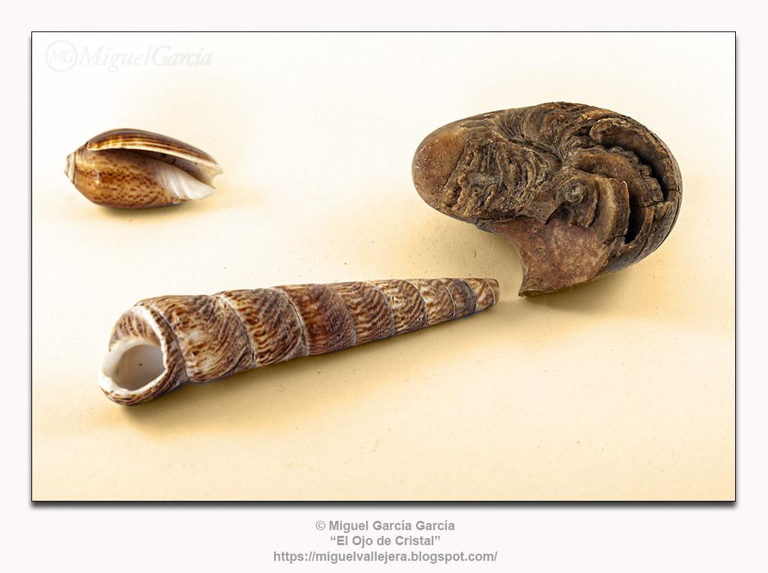 Conchas y fósiles.