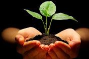 Contoh Makalah Pelestarian Lingkungan Hidup