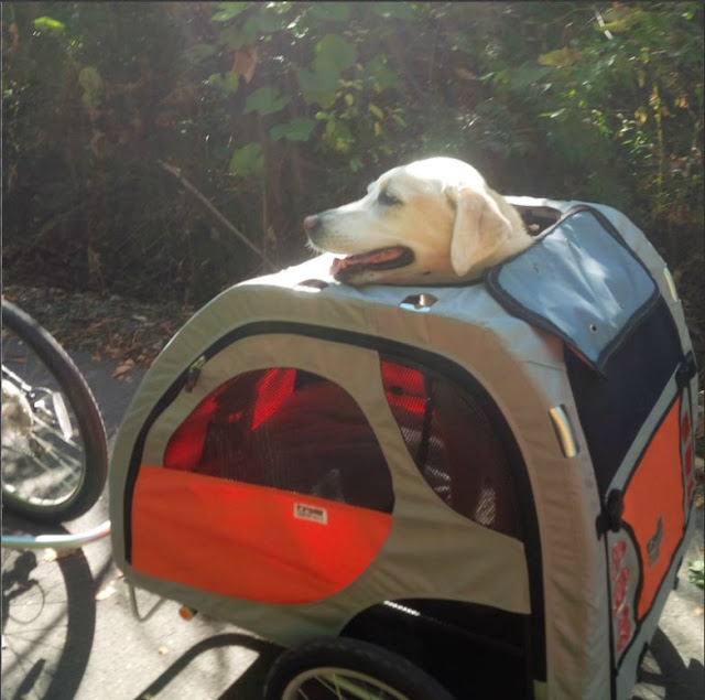 bike wagon for dogs
