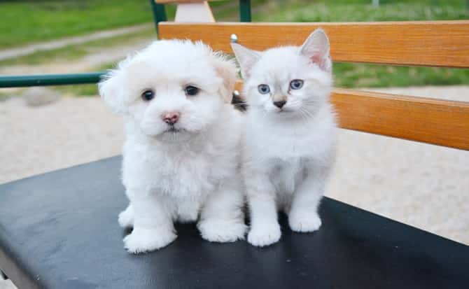 perro, gato, cachorros