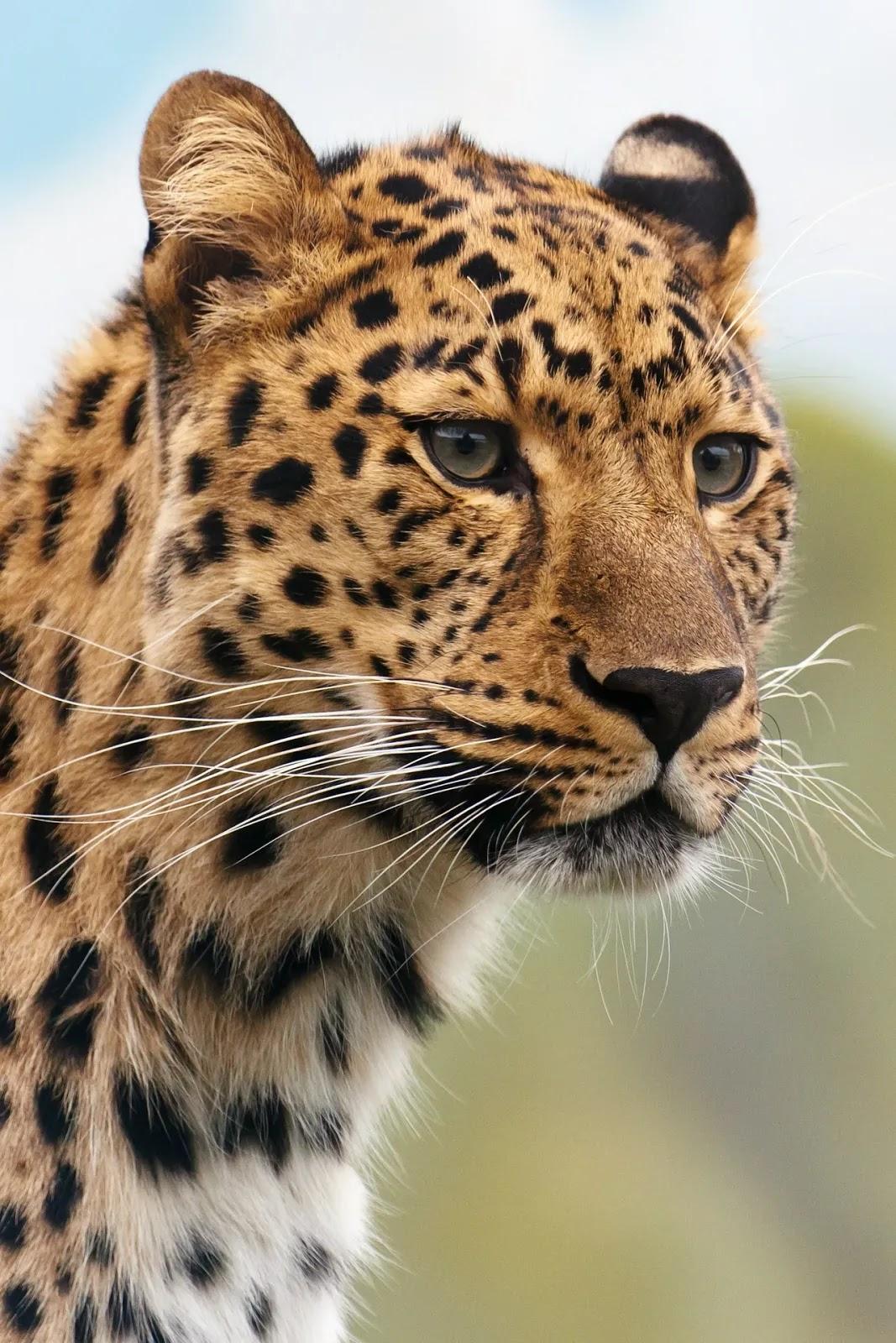 صور حيوانات مفترسة أخطر الحيوانات المفترسة