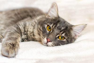 Resiko Ganti Makanan Kucing