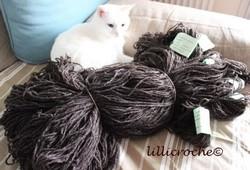 Le chat blanc de Lillicroche