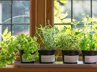4 Jenis Tanaman Herbal Hias yang Bisa Ditanam di Pot