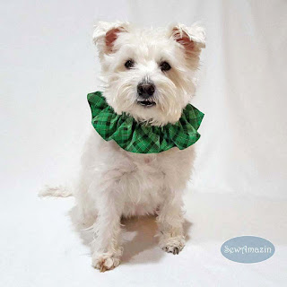Lucky Irish Plaid Green Pet Scrunchie Ruffle Collar, St Patricks Day
