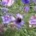 Paarse bloemen met hommel