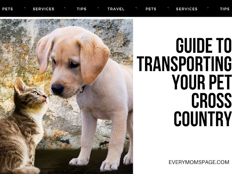 Guide to Transporting Your Pet Cross Country