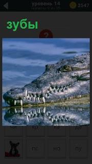 Голова крокодила в воде с большими зубами, которая отражается в воде
