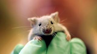فأر يسبب حالة من الفوضى خلال جلسة برلمان