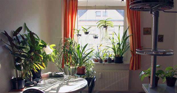 Best Lights for Indoor Growing