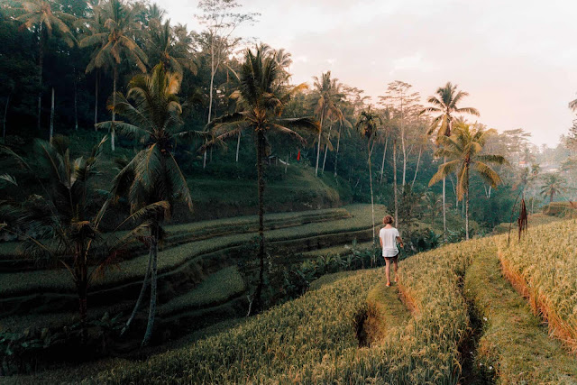 Nằm ở Ubud, cũng là một điểm đến kỳ nghỉ nổi tiếng trên toàn thế giới được biết đến với những khu nghỉ mát hoàn hảo và ruộng bậc thang Tegallalang là một kỳ quan từ xa xưa.