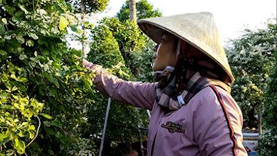 Chị Dung tạo dáng cây tam tài