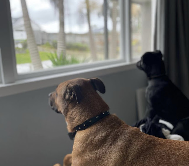 Canine Security Squad