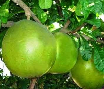 manfaat dan khasiat buah berenuk