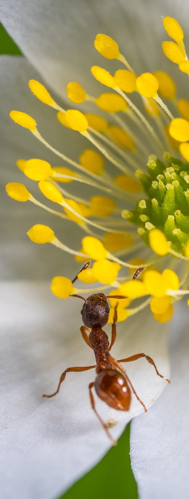Macro photo an ant on a flower.