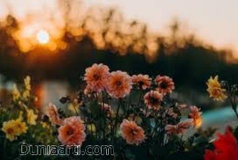 Pemandangan bunga