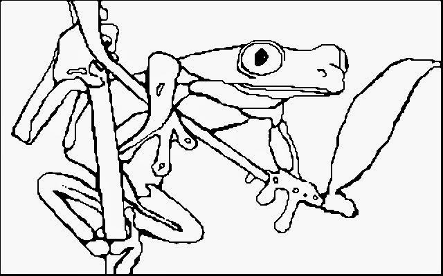 Ausmalbilder Frosch Kostenlos Ausmalbilderhq