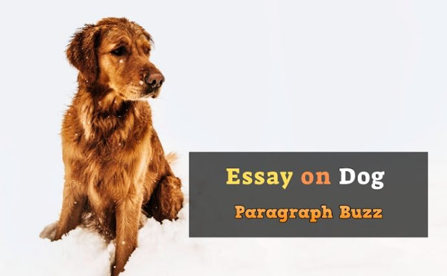 Essay on Dog