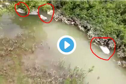 Biadab! Setelah Membunuhi Muslim, Tentara Myanmar Masukkan Mayat Ke Dalam Karung Lalu Dibuang ke Sungai [VIDEO]