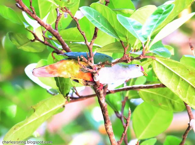 Birdwatching trip to Indonesia