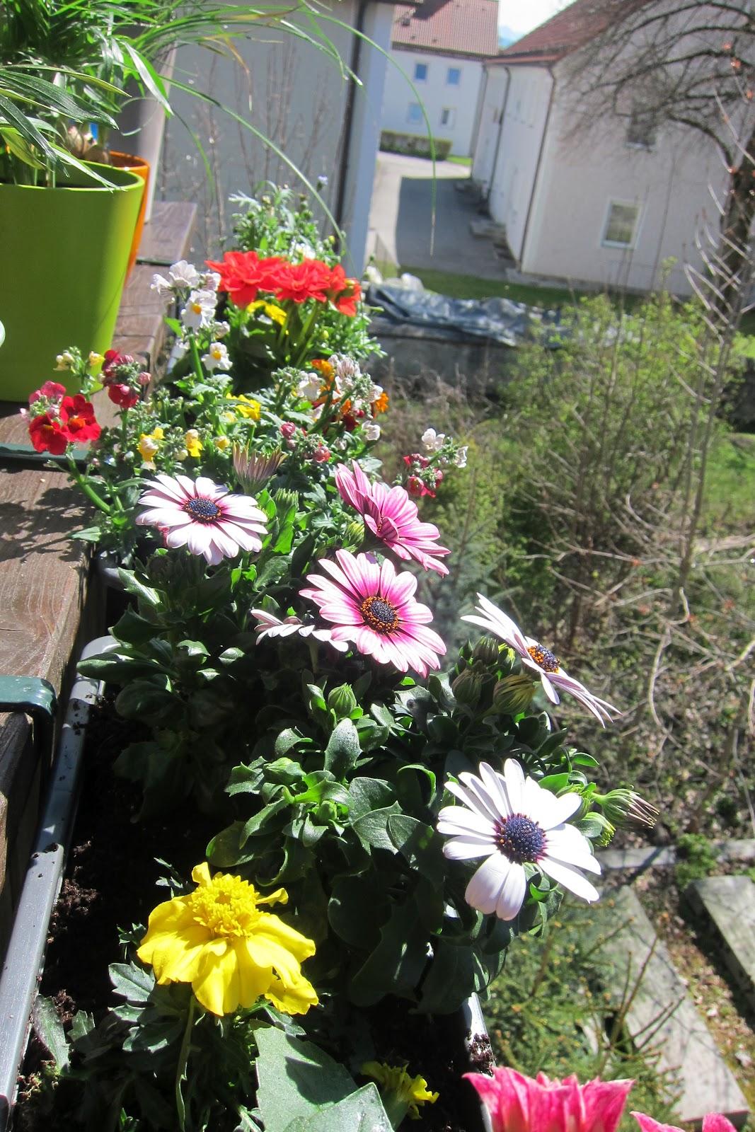 balkonblumen viel sonne balkon und beetpflanzen farbenfrohe und widerstandsf hige balkonblumen. Black Bedroom Furniture Sets. Home Design Ideas