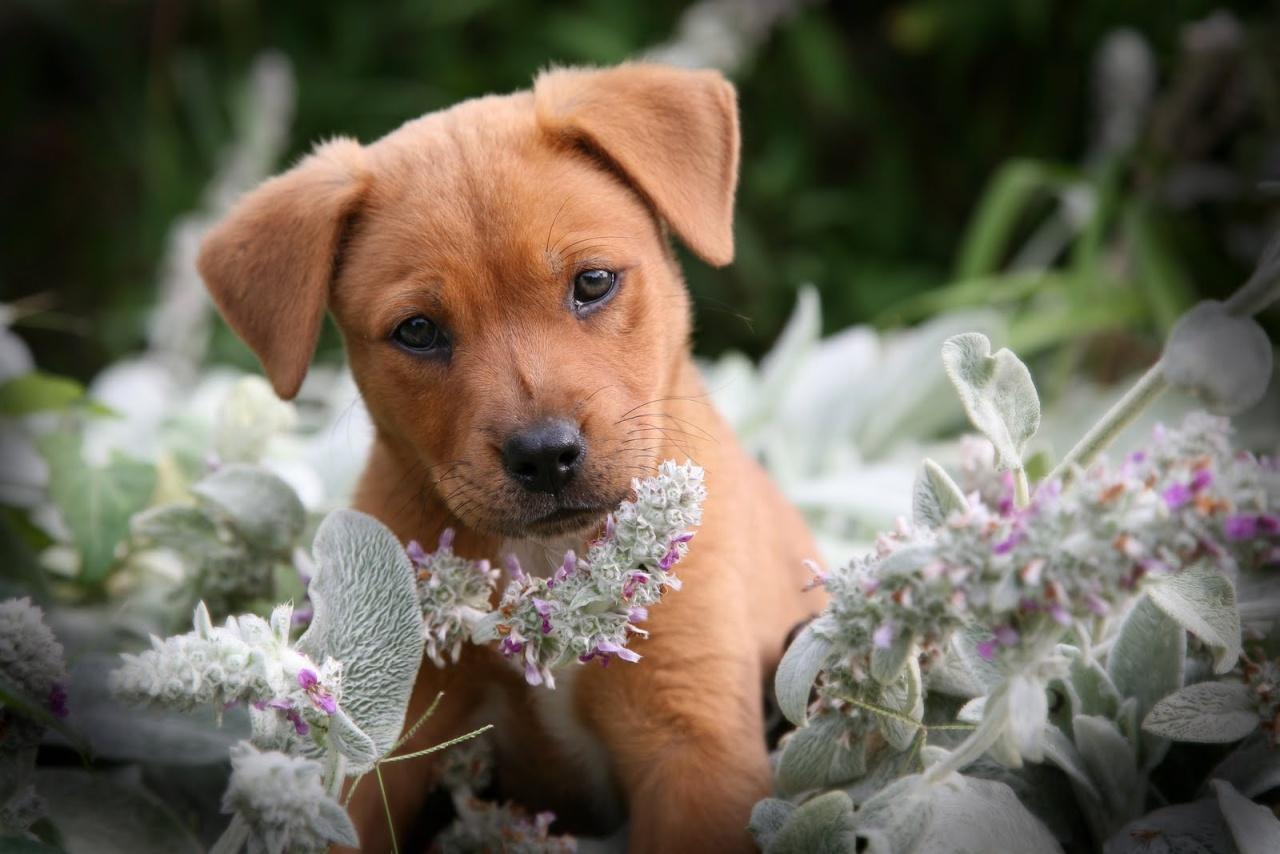 dog - photo #34