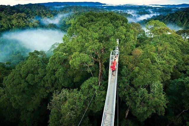 Floresta Nublada Monte Verde