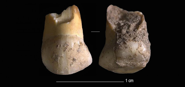 48,000 years old tooth from one of the last Neanderthals found in Northern Italy