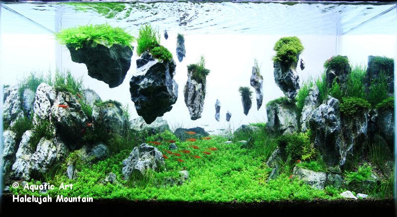 Bể thủy sinh phong cách Avatar - tác phẩm hoàn chỉnh