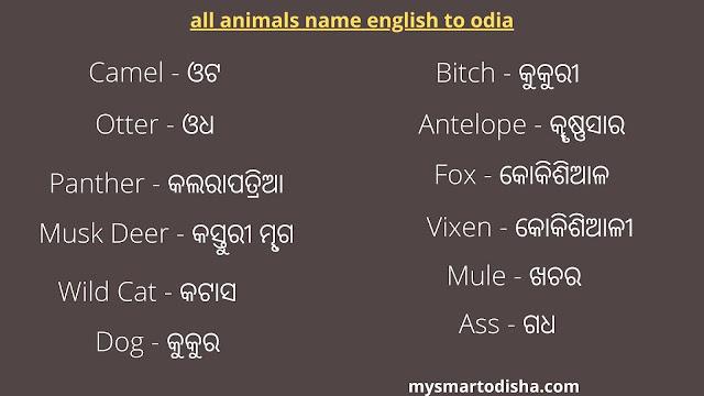 animal name English to odia, all animals name english to odia, animals name in odia, animal name odia to english, animals english to odia translate.