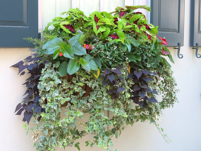 beautiful window box pictures ideas