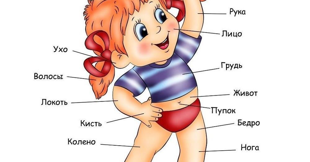 Части тела для малышей с картинками