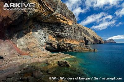 Mediterranean monk Seal habitat