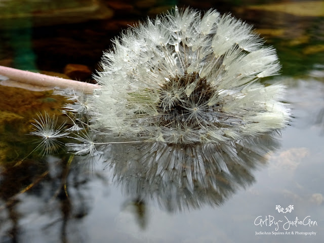 Floating Dandelion 8 Photos + Video