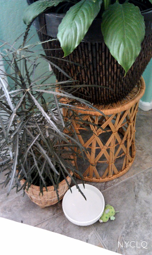 Focal Point Styling Creating An Indoor Garden Room